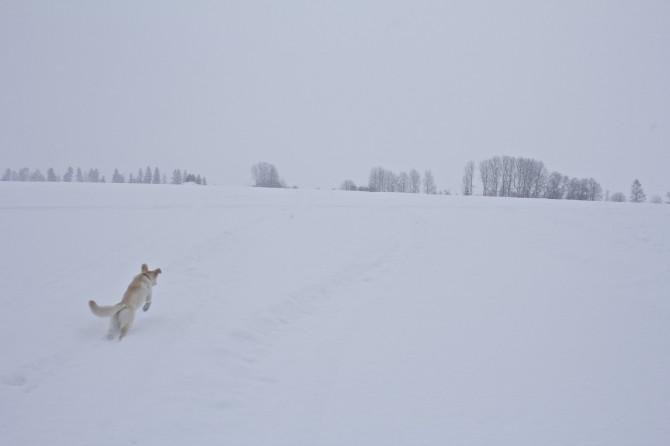 Vinterlek10
