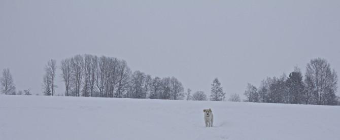 Vinterlek3