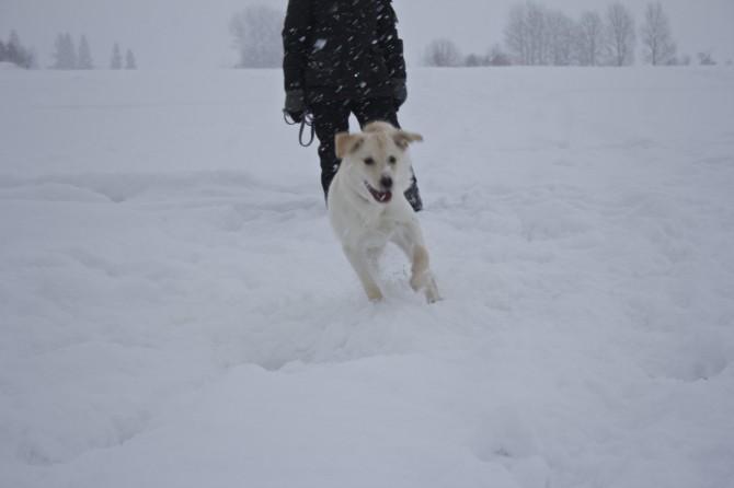 Vinterlek7