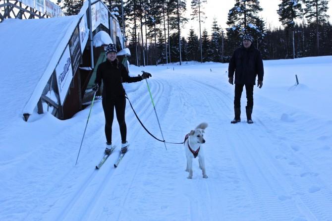 längdskidor med hund