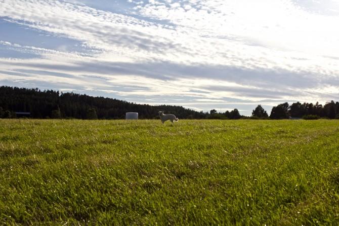 Sommar i Sundsvall