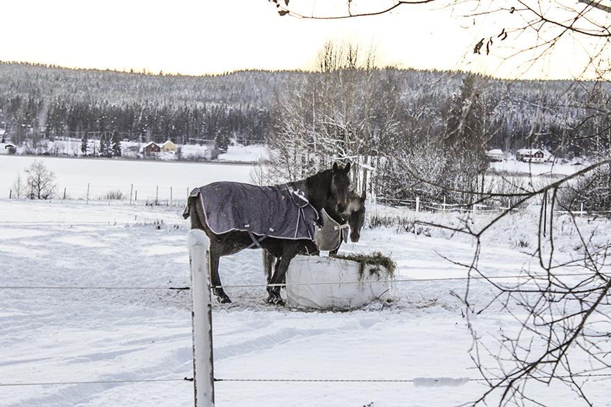 Jul_hästar
