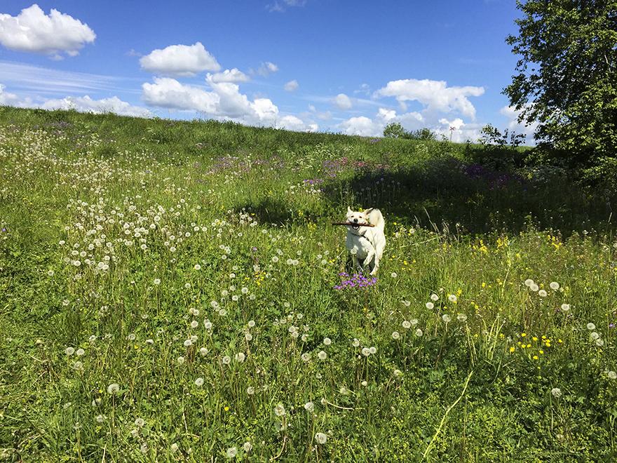 Hund-sommar